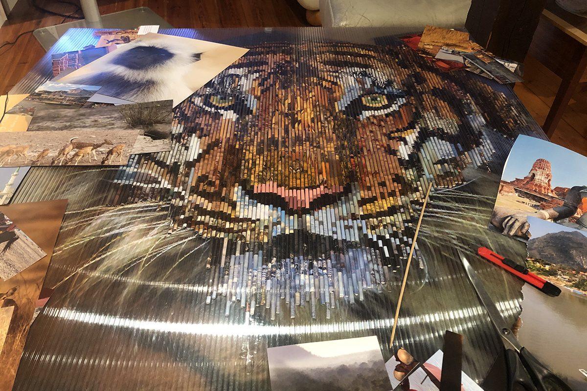 work in progress the tiger